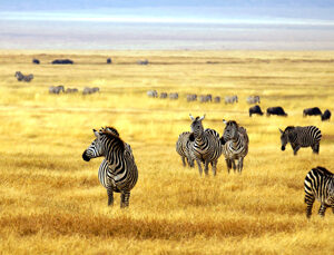 6 places to visit in Africa